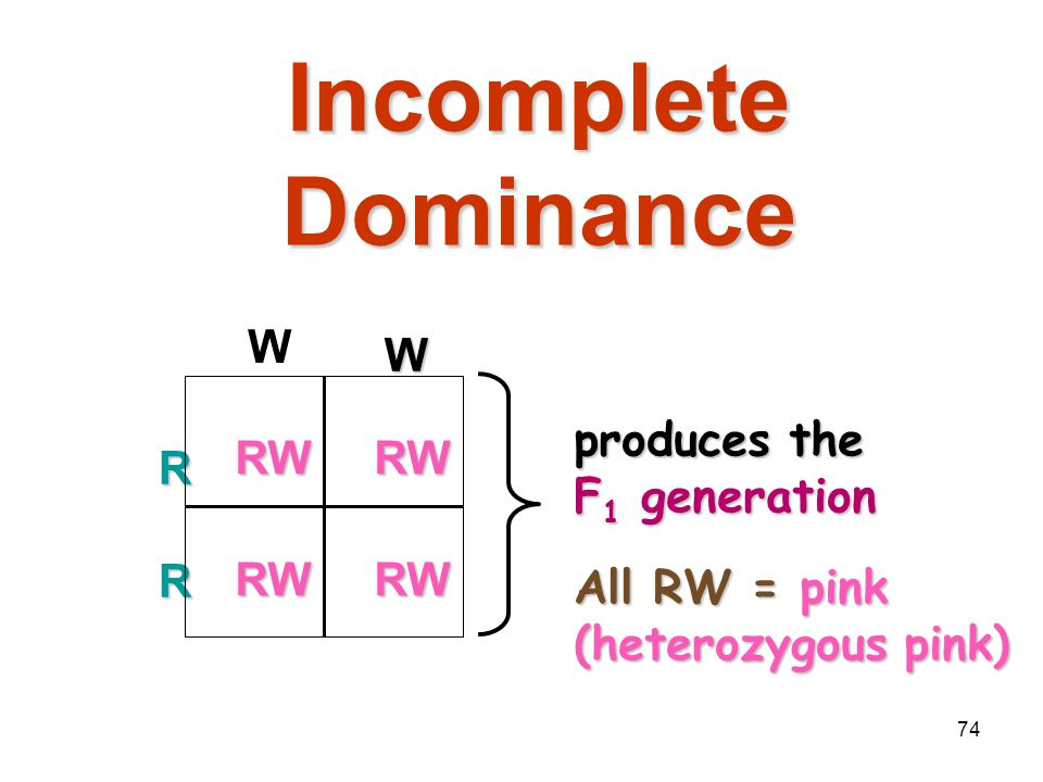 Incomplete Dominance W R W All RW = pink (heterozygous pink)