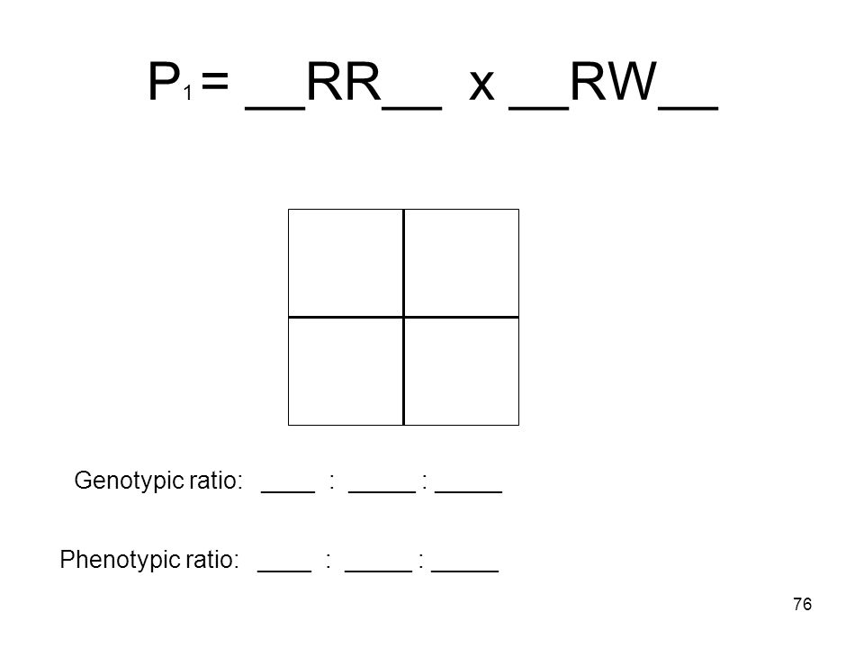 P1 = __RR__ x __RW__ Genotypic ratio: ____ : _____ : _____