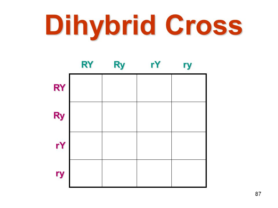 Mendelian Genetics 4/15/2017 Dihybrid Cross RY Ry rY ry RY Ry rY ry