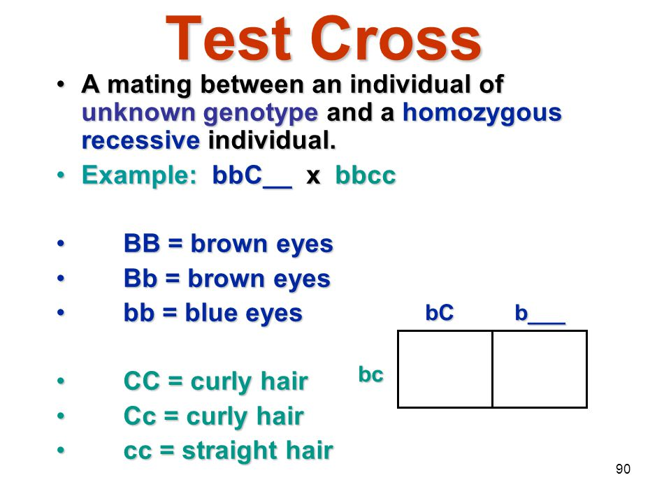 Mendelian Genetics 4/15/2017. Test Cross. A mating between an individual of unknown genotype and a homozygous recessive individual.