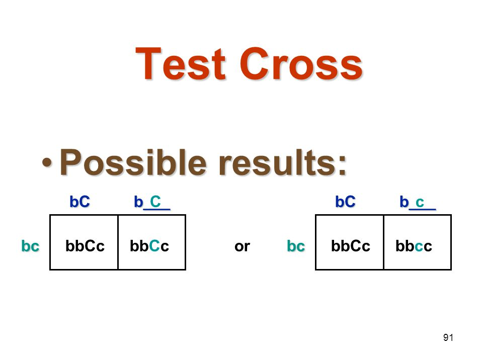 Test Cross Possible results: bC b___ bc bbCc C bC b___ bc bbCc bbcc or