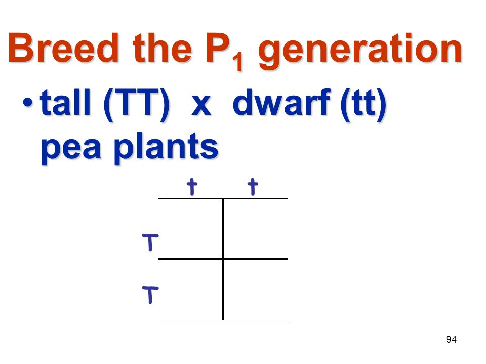 Breed the P1 generation tall (TT) x dwarf (tt) pea plants t T