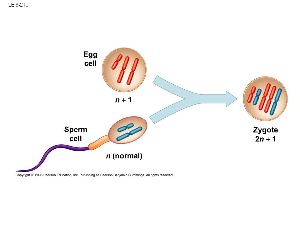 LE 8-21c Egg cell n + 1 Sperm cell Zygote 2n + 1 n (normal)