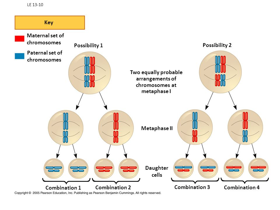 Key Maternal set of chromosomes Possibility 1 Possibility 2