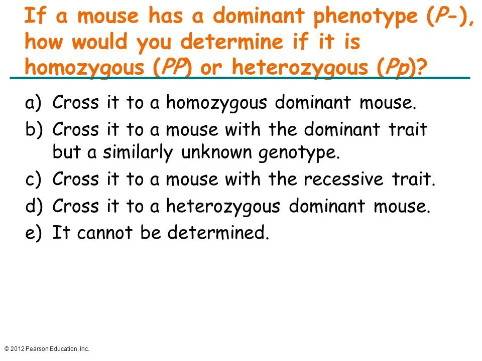 If a mouse has a dominant phenotype (P-), how would you determine if it is homozygous (PP) or heterozygous (Pp)