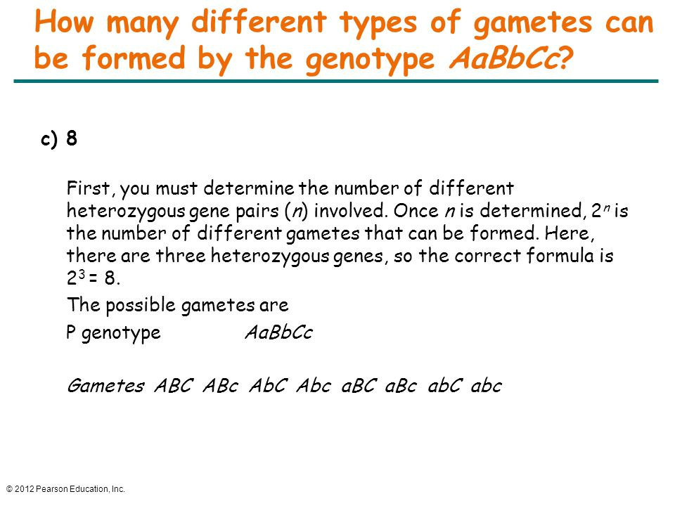 How many different types of gametes can be formed by the genotype AaBbCc