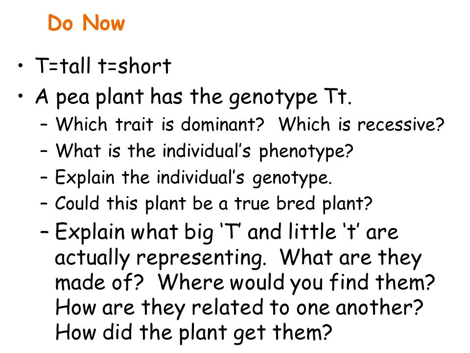 A pea plant has the genotype Tt.