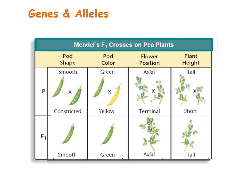 Mendel's F1 Crosses on Pea Plants