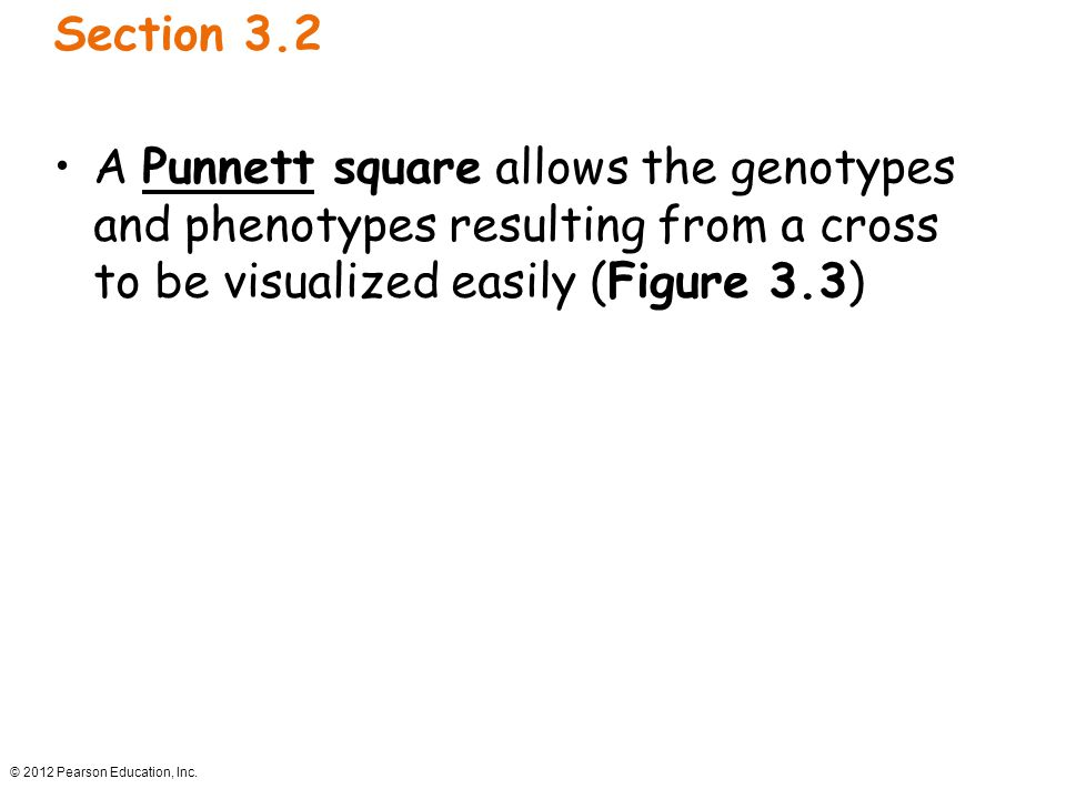 Section 3.2 A Punnett square allows the genotypes and phenotypes resulting from a cross to be visualized easily (Figure 3.3)