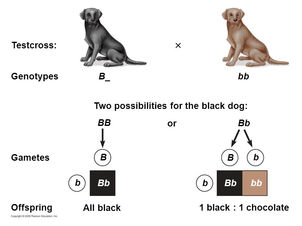 Two possibilities for the black dog: