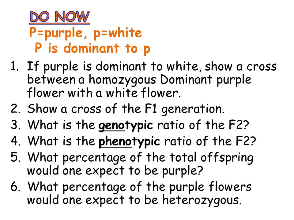 DO NOW P=purple, p=white P is dominant to p