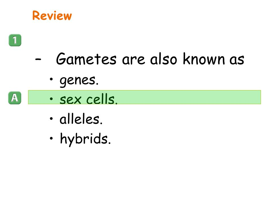 Gametes are also known as