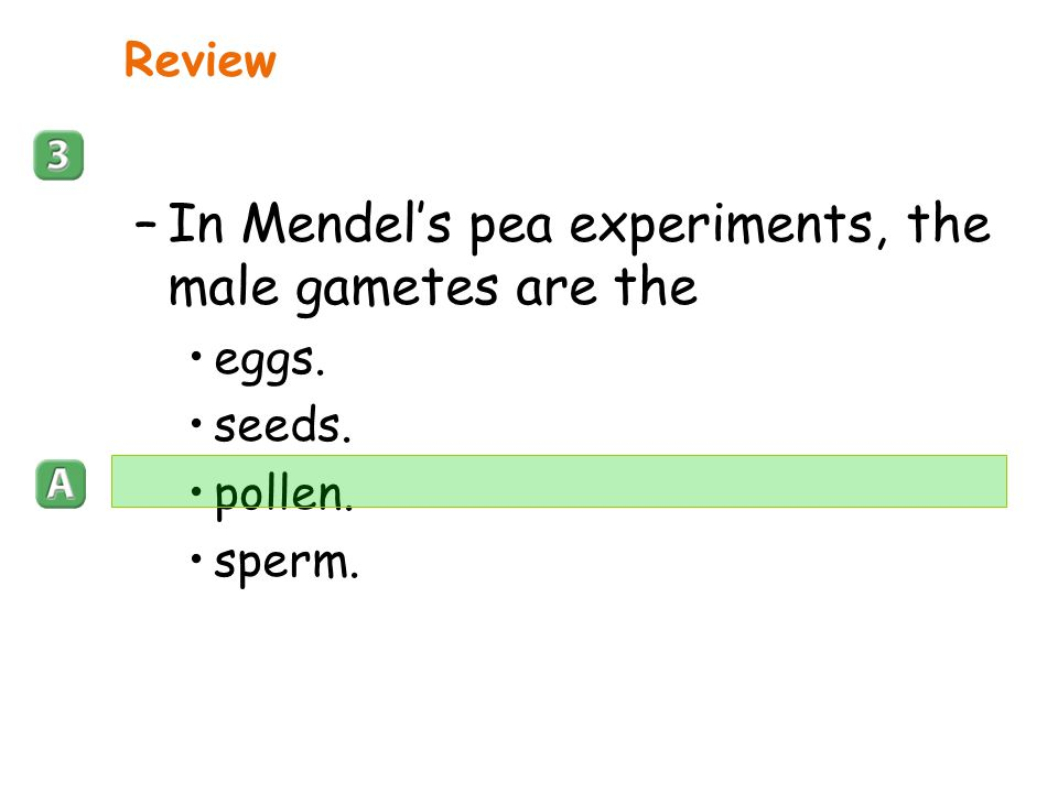 In Mendel's pea experiments, the male gametes are the