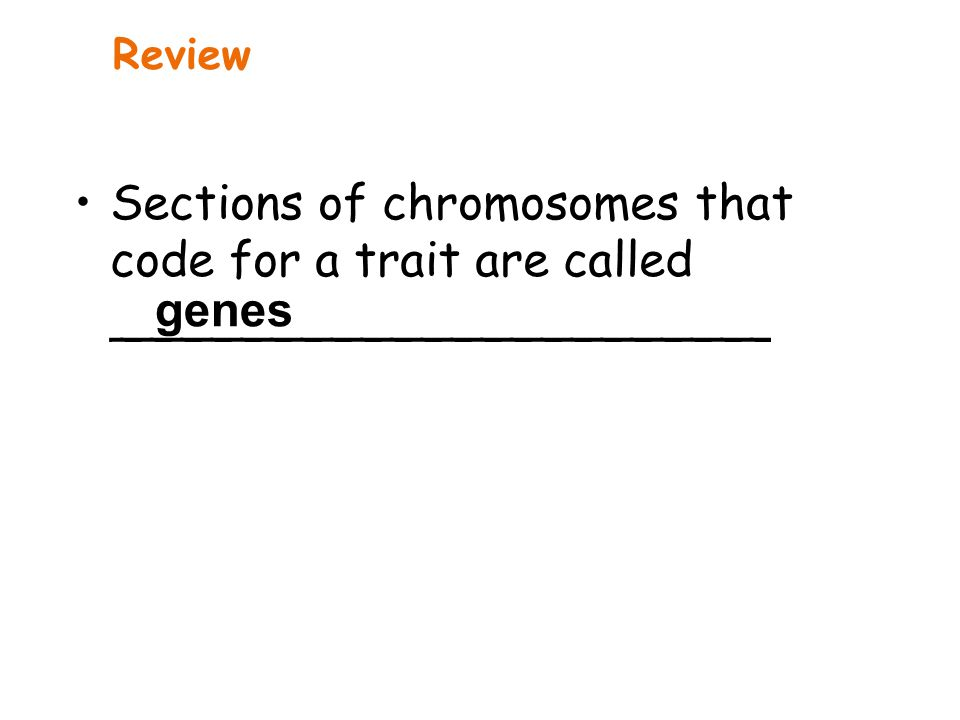 Review Sections of chromosomes that code for a trait are called ______________________ genes