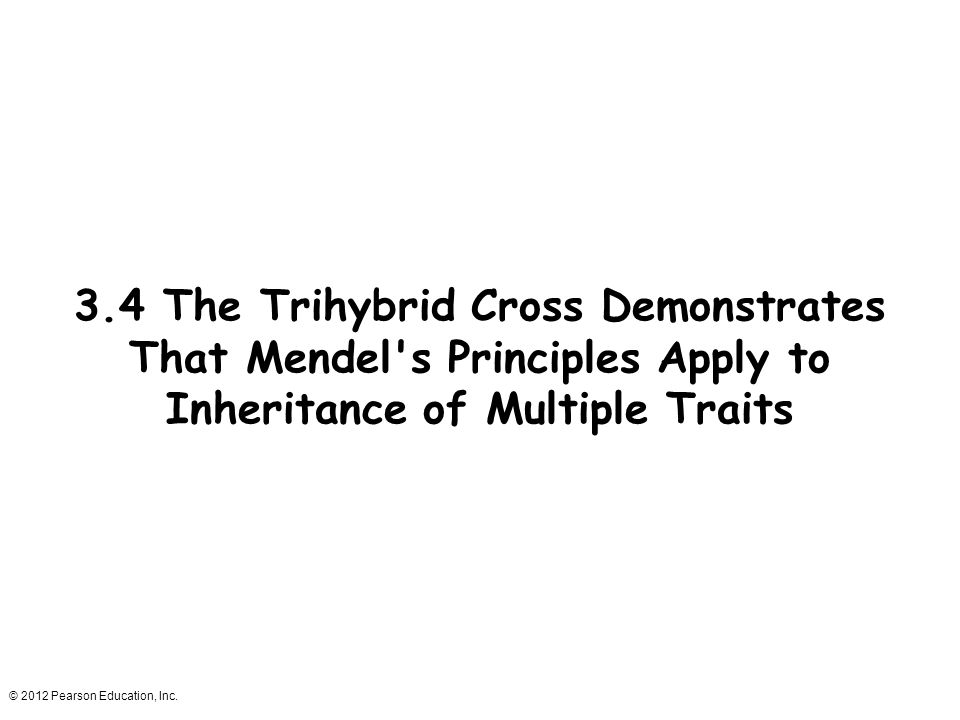 3.4 The Trihybrid Cross Demonstrates That Mendel s Principles Apply to Inheritance of Multiple Traits