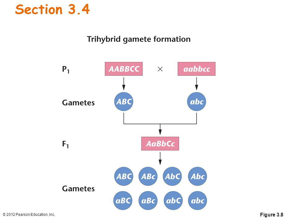 Section 3.4 Figure 3.8 © 2012 Pearson Education, Inc.