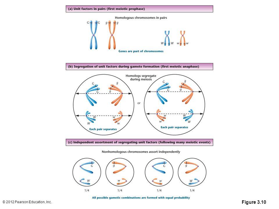Figure 3.10 © 2012 Pearson Education, Inc.