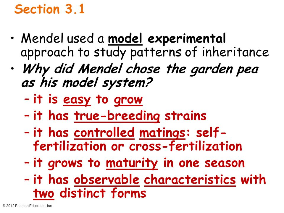 Why did Mendel chose the garden pea as his model system