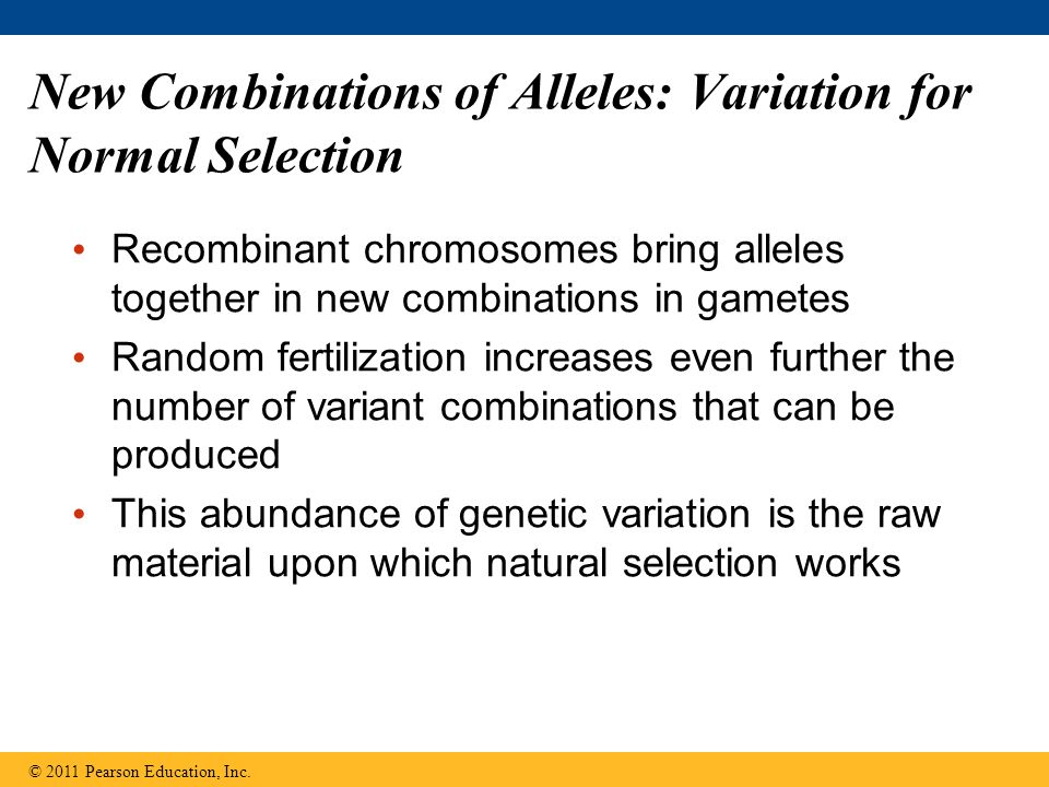New Combinations of Alleles: Variation for Normal Selection