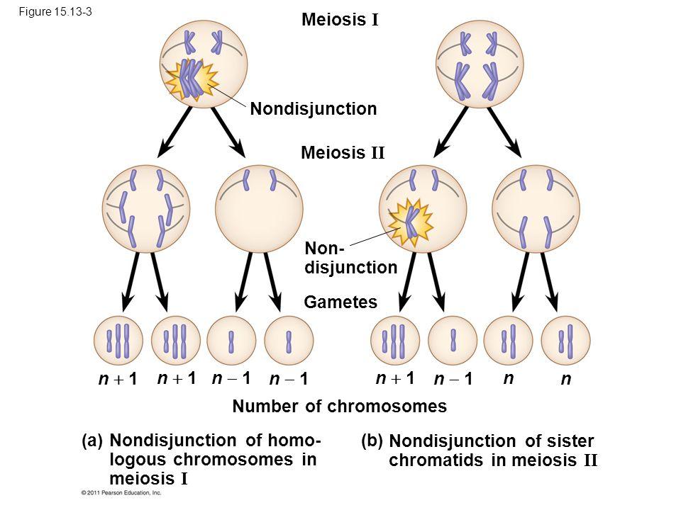 Nondisjunction of homo- logous chromosomes in meiosis I (a)
