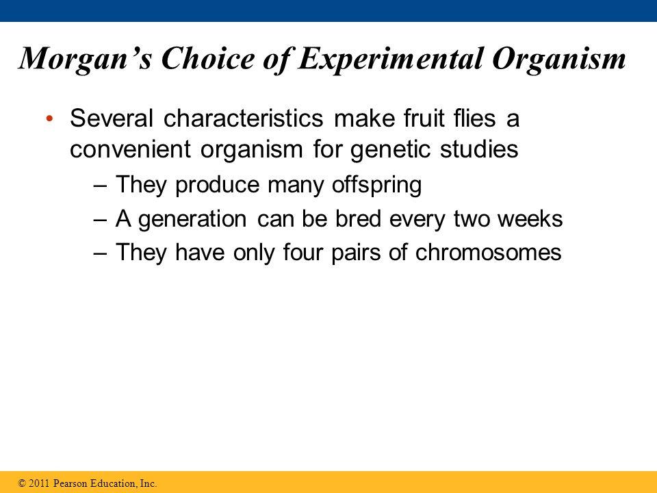 Morgan's Choice of Experimental Organism