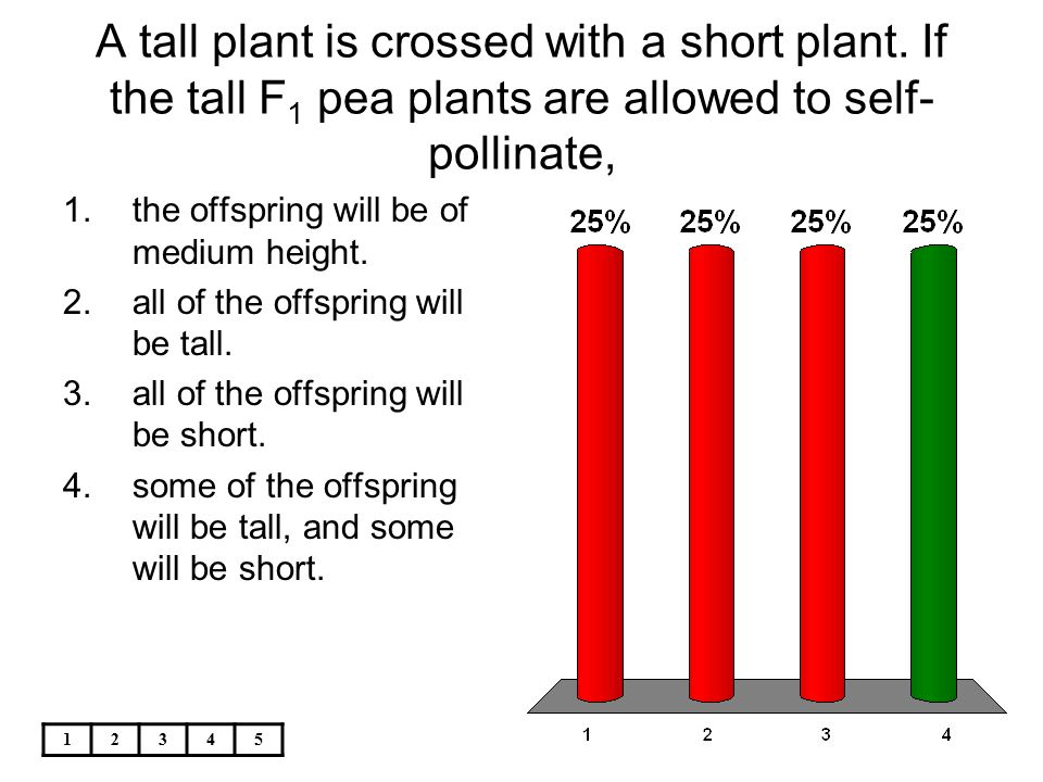 A tall plant is crossed with a short plant