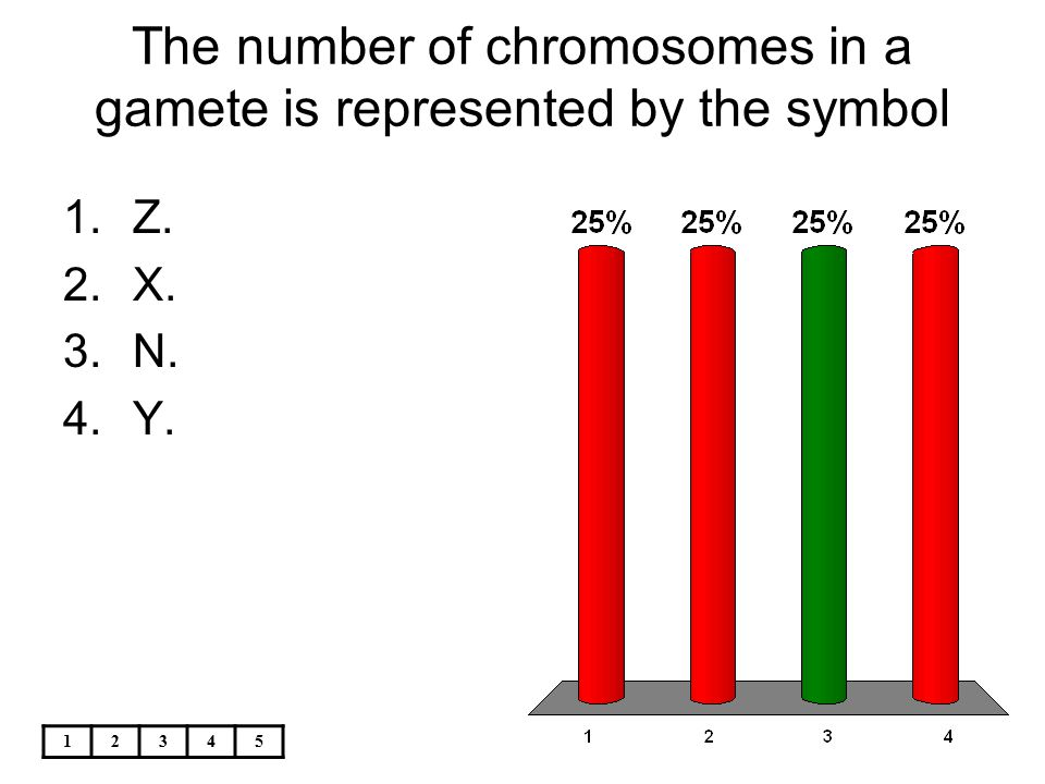 The number of chromosomes in a gamete is represented by the symbol