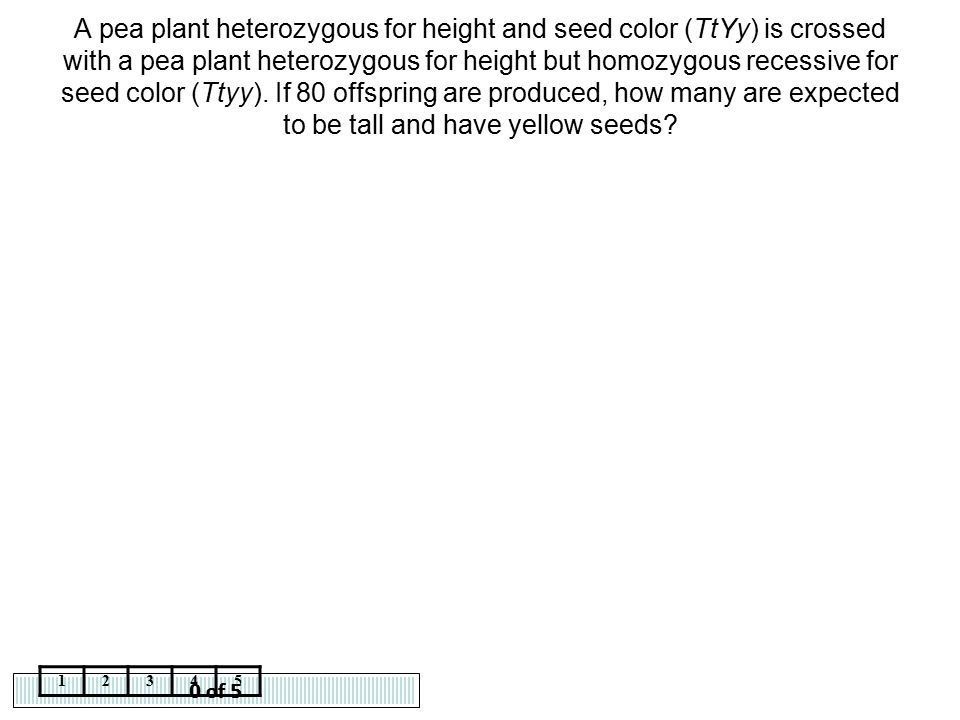 A pea plant heterozygous for height and seed color (TtYy) is crossed with a pea plant heterozygous for height but homozygous recessive for seed color (Ttyy). If 80 offspring are produced, how many are expected to be tall and have yellow seeds