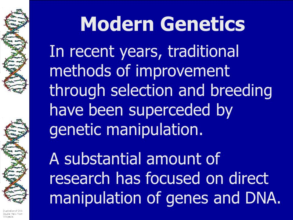 Modern Genetics In recent years, traditional methods of improvement through selection and breeding have been superceded by genetic manipulation.