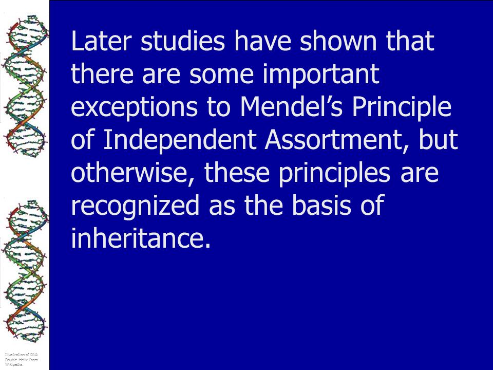 Later studies have shown that there are some important exceptions to Mendel's Principle of Independent Assortment, but otherwise, these principles are recognized as the basis of inheritance.