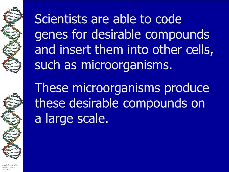 Scientists are able to code genes for desirable compounds and insert them into other cells, such as microorganisms.