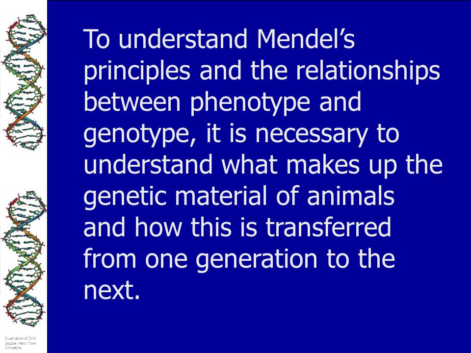 To understand Mendel's principles and the relationships between phenotype and genotype, it is necessary to understand what makes up the genetic material of animals and how this is transferred from one generation to the next.