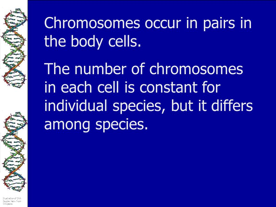 Chromosomes occur in pairs in the body cells.