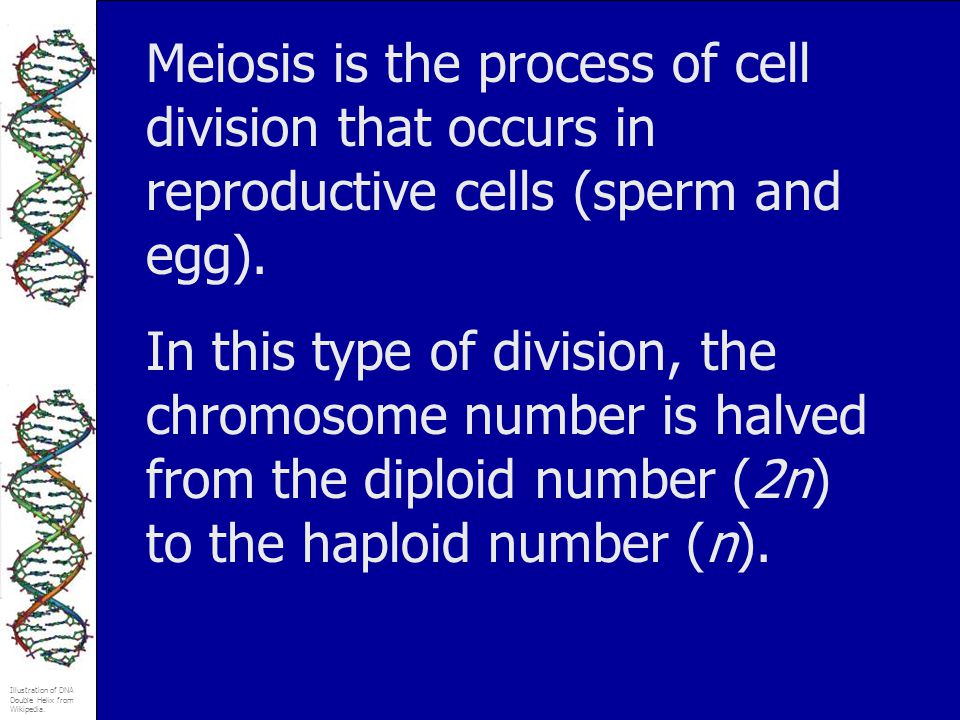 Meiosis is the process of cell division that occurs in reproductive cells (sperm and egg).