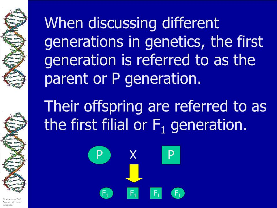 Their offspring are referred to as the first filial or F1 generation.