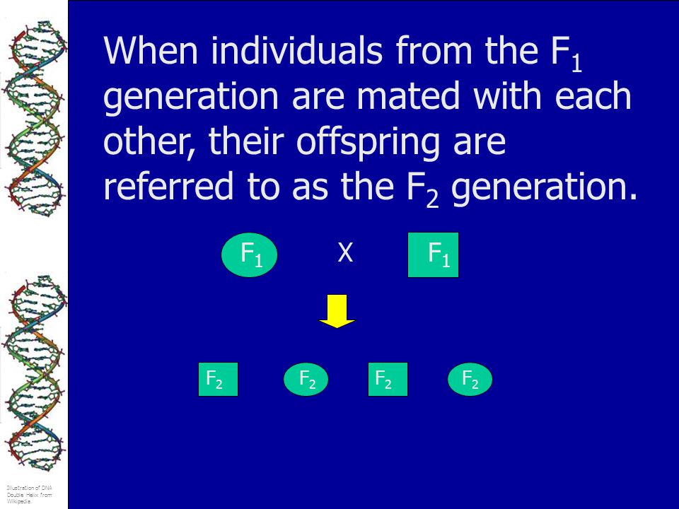 When individuals from the F1 generation are mated with each other, their offspring are referred to as the F2 generation.