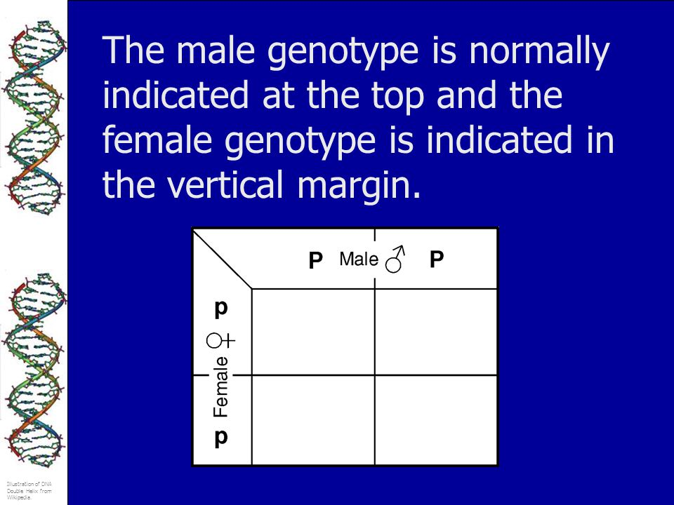 The male genotype is normally indicated at the top and the female genotype is indicated in the vertical margin.