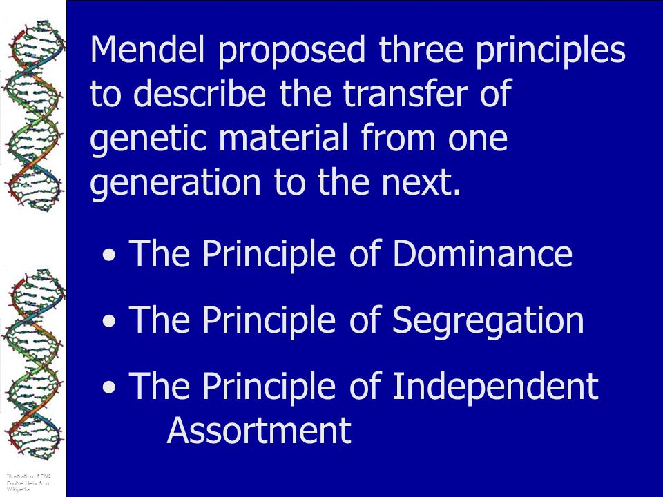 Mendel proposed three principles to describe the transfer of genetic material from one generation to the next.