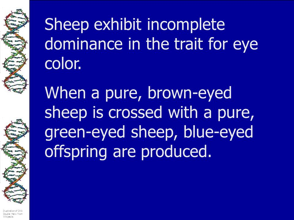 Sheep exhibit incomplete dominance in the trait for eye color.