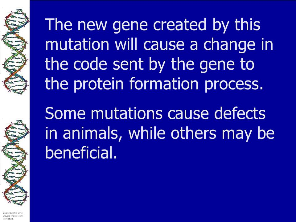 The new gene created by this mutation will cause a change in the code sent by the gene to the protein formation process.