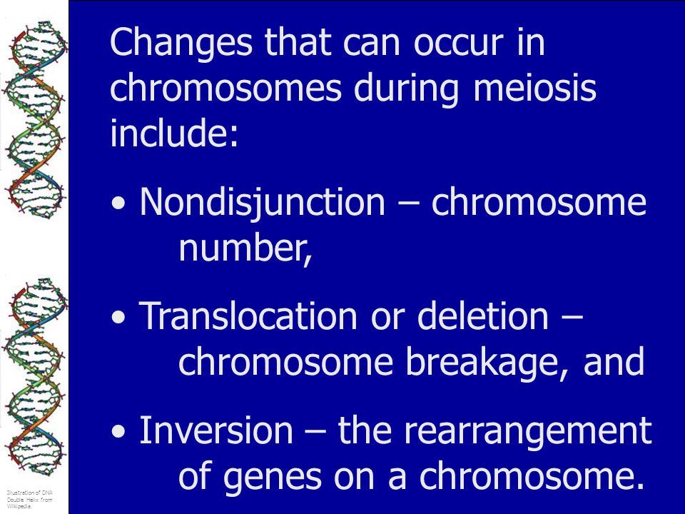 Changes that can occur in chromosomes during meiosis include: