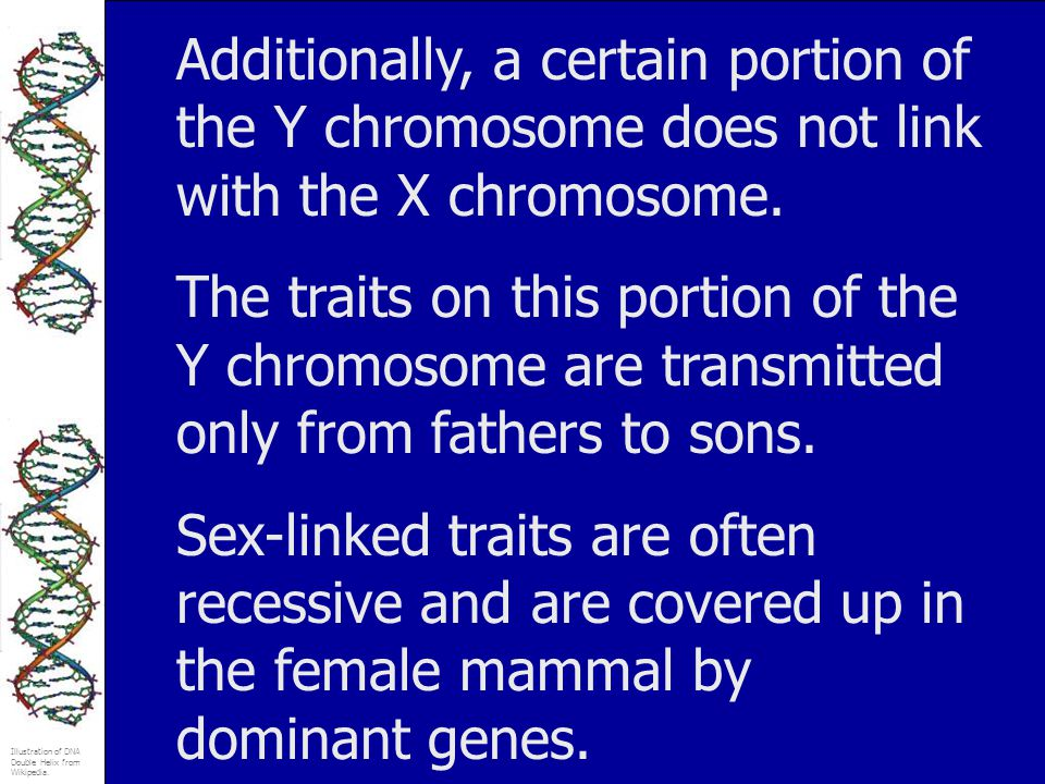 Additionally, a certain portion of the Y chromosome does not link with the X chromosome.