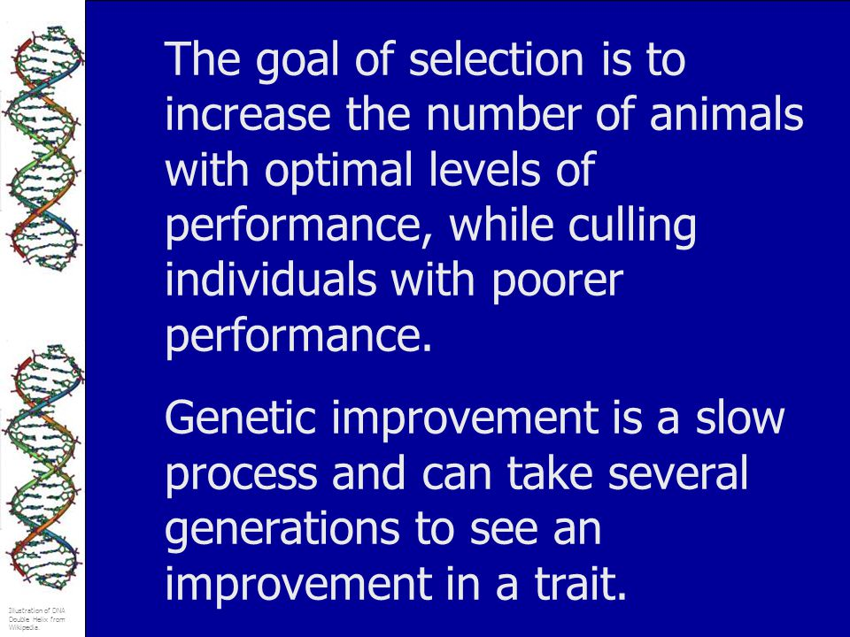 The goal of selection is to increase the number of animals with optimal levels of performance, while culling individuals with poorer performance.