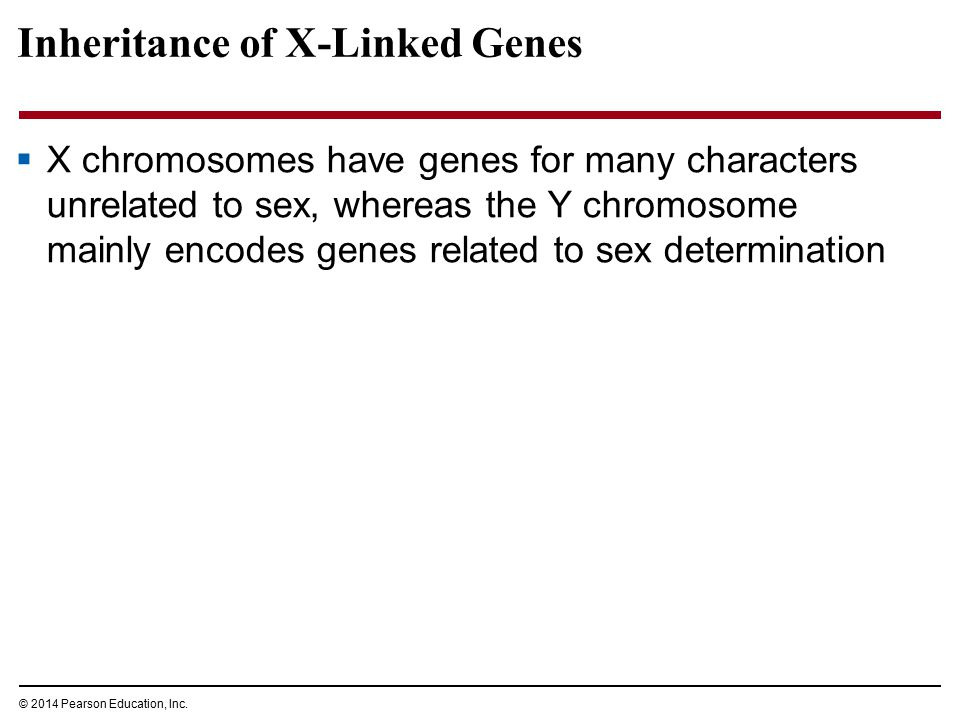 Inheritance of X-Linked Genes