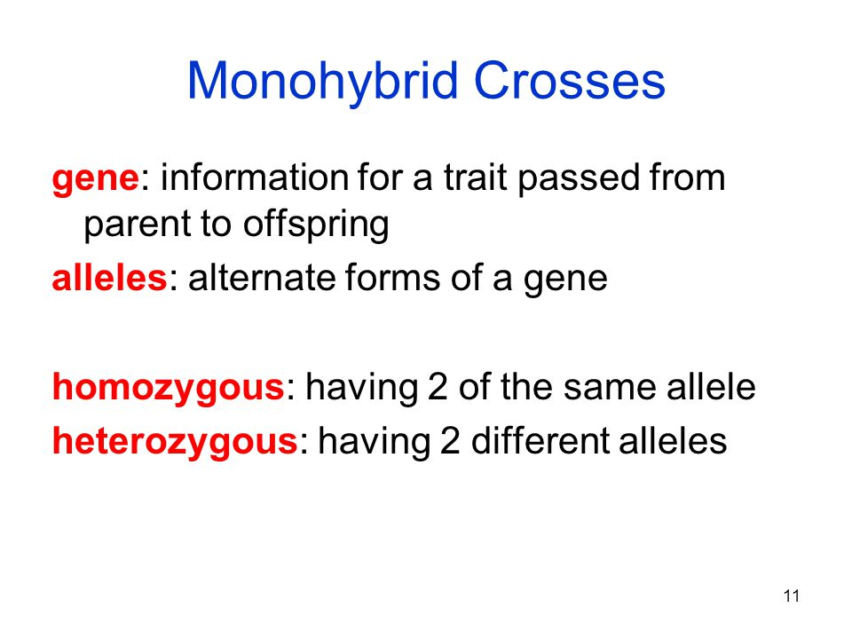 Monohybrid Crosses gene: information for a trait passed from parent to offspring. alleles: alternate forms of a gene.