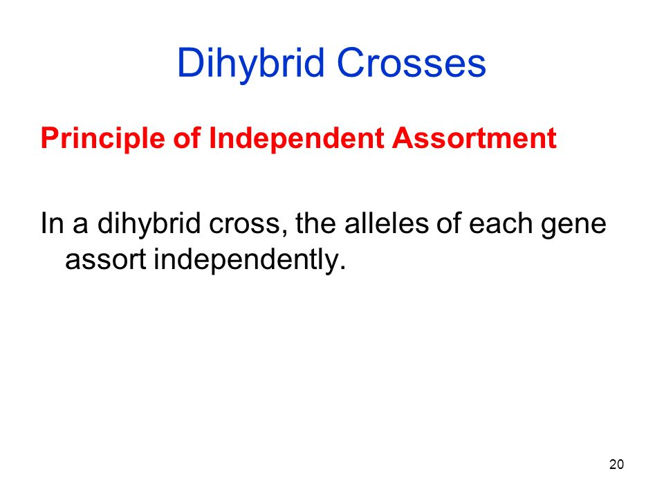 Dihybrid Crosses Principle of Independent Assortment