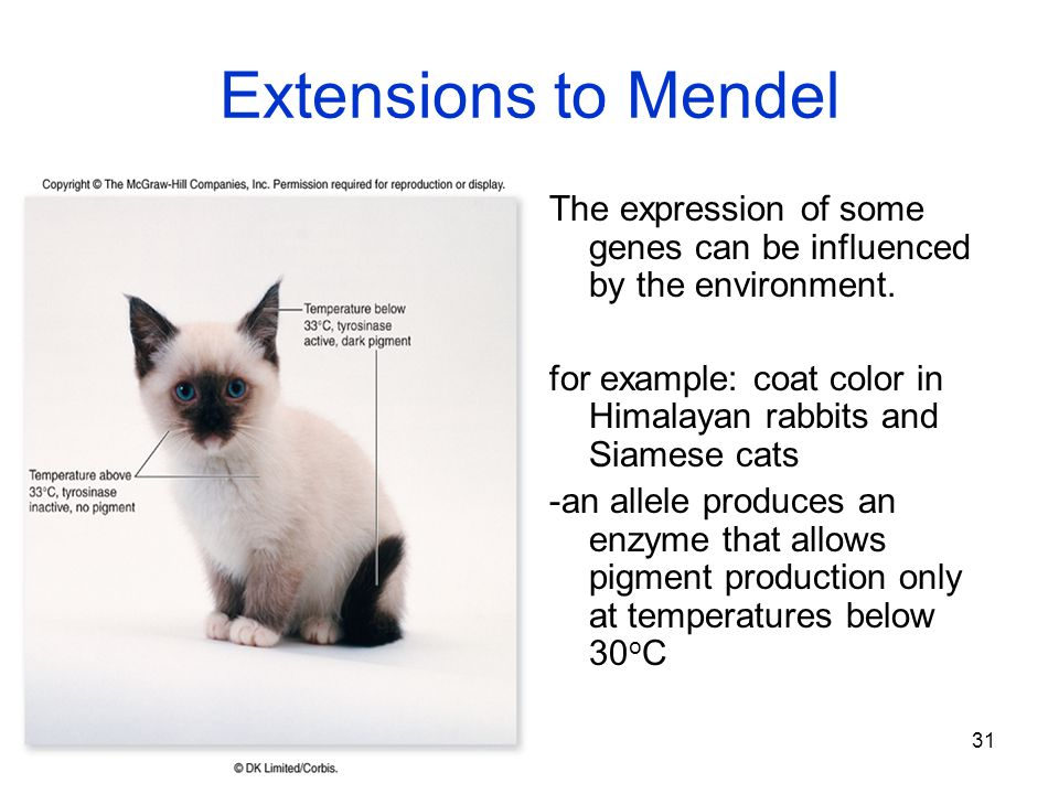 Extensions to Mendel The expression of some genes can be influenced by the environment.