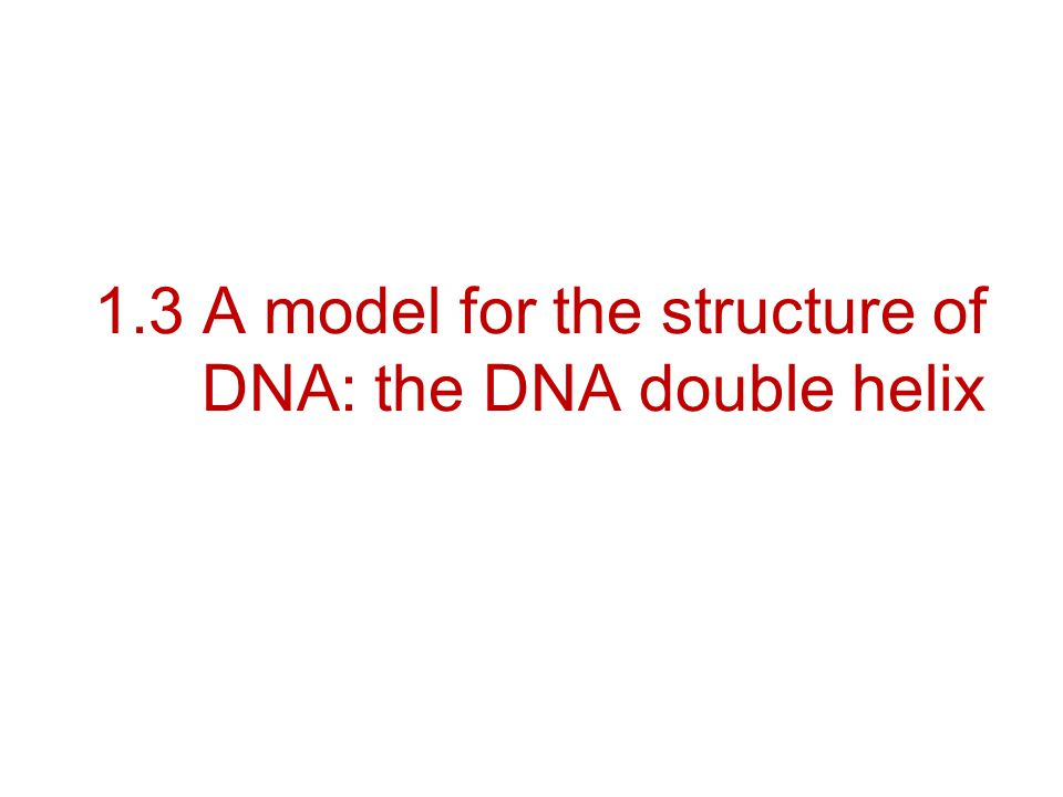 1.3 A model for the structure of DNA: the DNA double helix