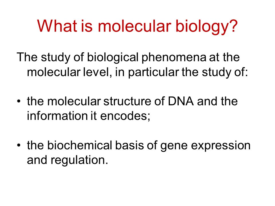What is molecular biology