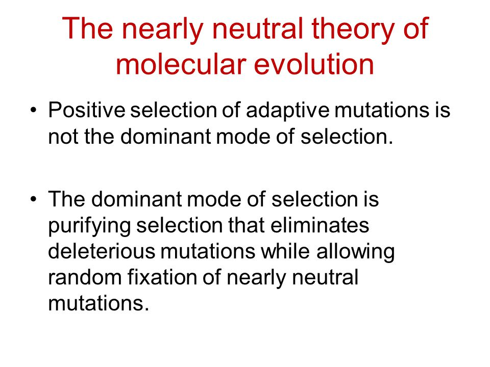 The nearly neutral theory of molecular evolution